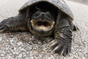 Dunaharaszti – Veszélyes  állatokat találtak egy házban