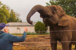 Szada elefánt